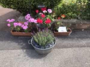 Flowers on the Doors Festival 2020, Greystone Park, Sundridge
